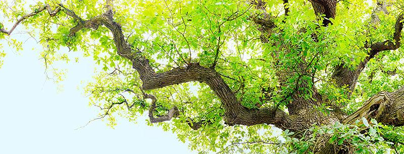 fotokunst-fotograf-nuernberg-freudenberger-fotostudio-baeume-himmelslaub-II-01.jpg