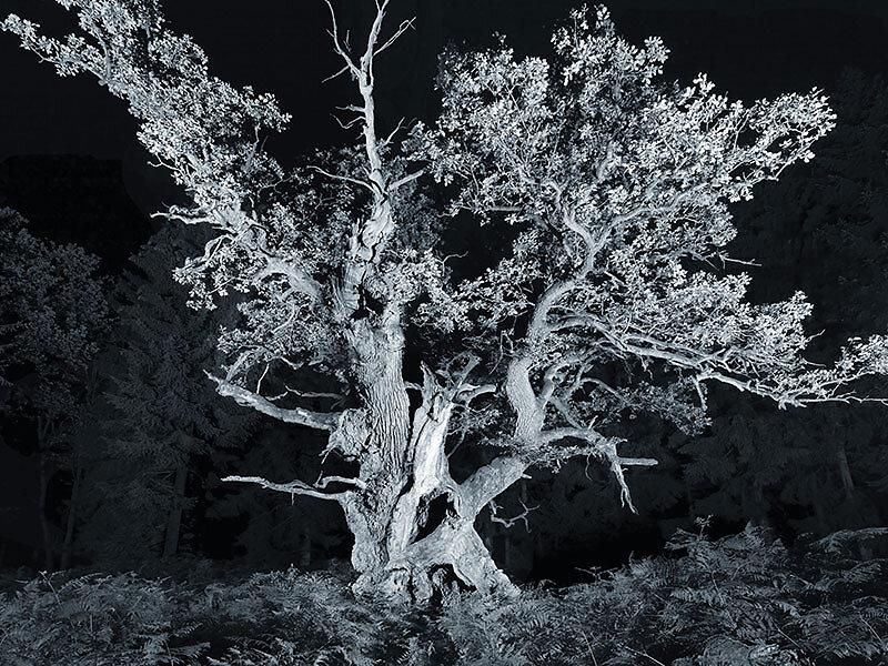 fotokunst-fotograf-nuernberg-freudenberger-fotostudio-baeume-zeitfluestern-06.jpg
