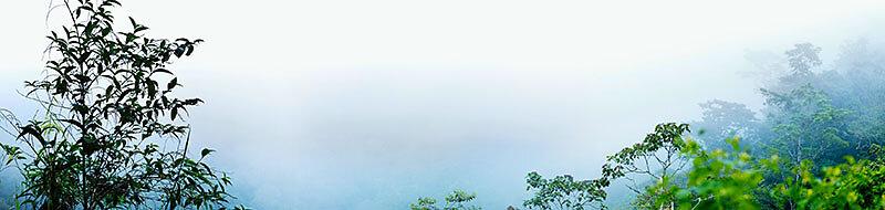 SELVA VERDE  -  Cloudbrigde