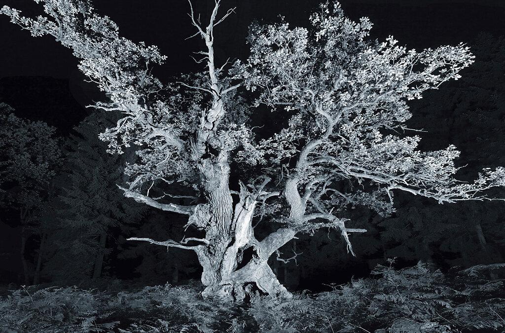 alte-Baume-Fotokunst.jpg
