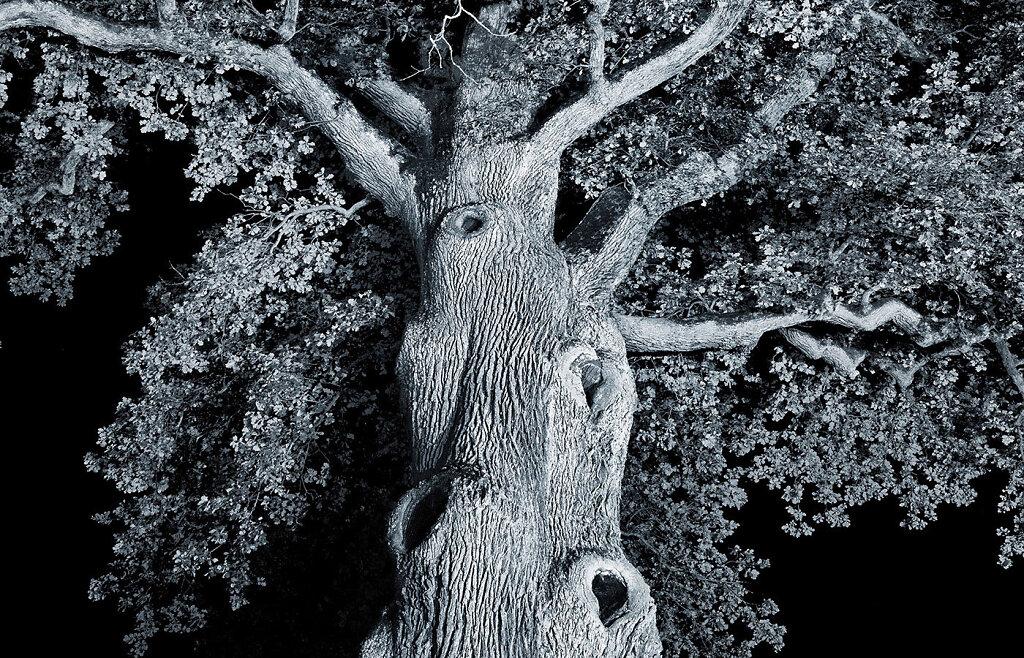 uralte-Baume-Detail.jpg