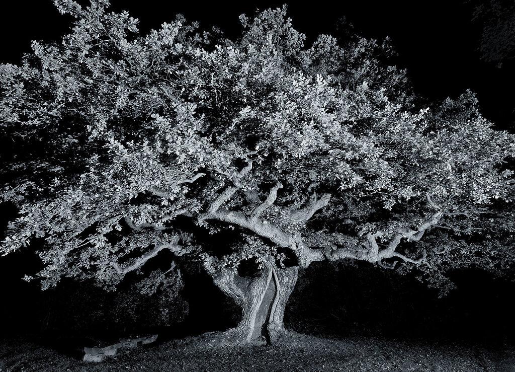 uralte-Baume-schwarzweiss.jpg