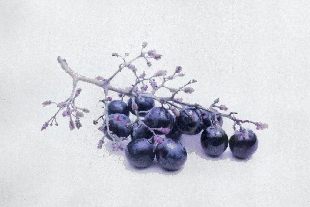 Weintrauben Fotokunst