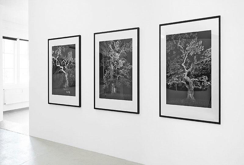 """Fotokunst aus der Werkreihe """"ZEITFLÜSTERN -TAUSENDJÄHRIGE EICHEN"""""""