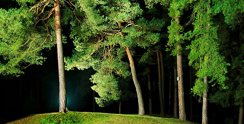fotokunst-fotograf-nuernberg-freudenberger-fotostudio-baeume-lichtblick-02.jpg